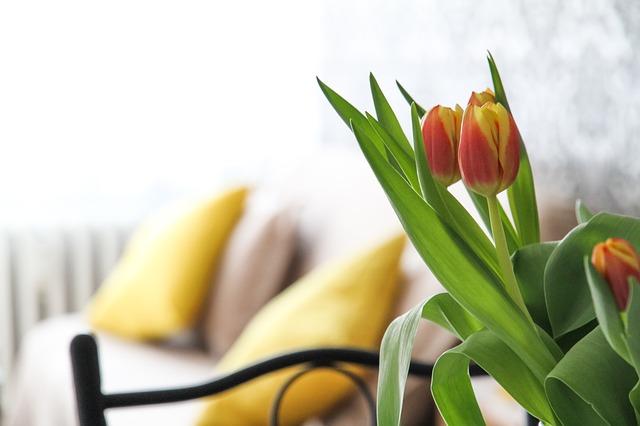 tulipány, sedačka, žluté polštáře