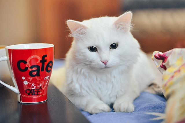 bílá kočka a hrnek s potiskem